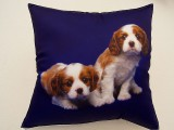 Fotopolštářek - Dva béžovohnědí psi