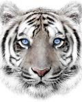 Mikroflanelová dětská deka Bílý tygr